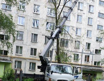 Аренда автовышки для опилки деревьев