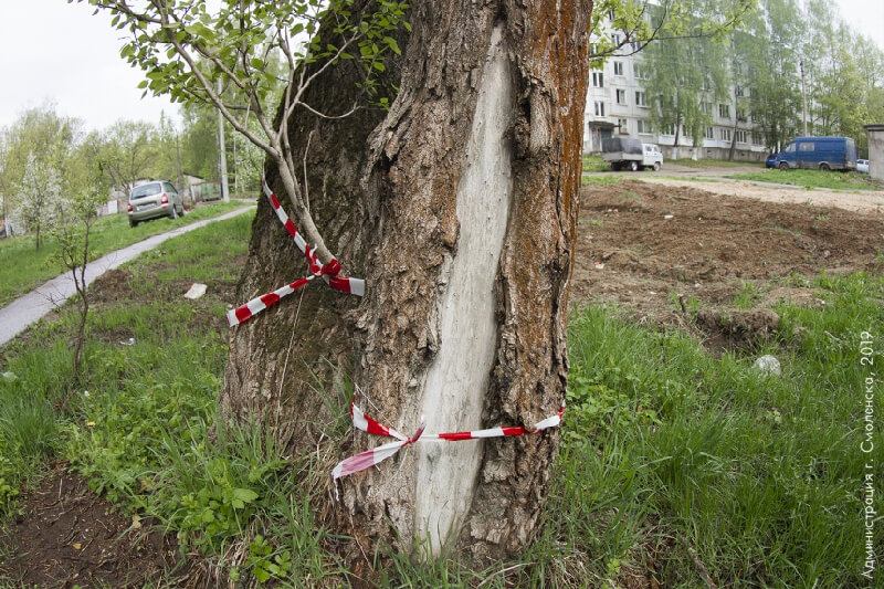 Наши АГП помогли удалить аварийные деревья в Якиманке
