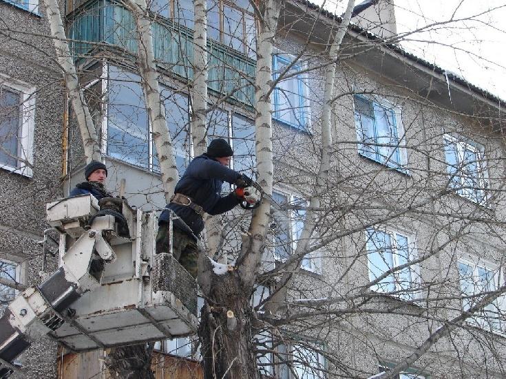 Аренда автовышки для опиловки деревьев